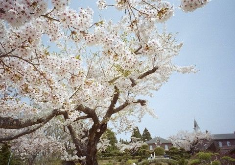 函館女子修道院