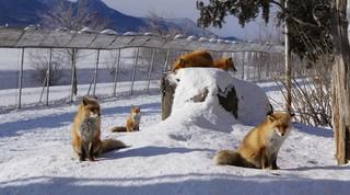 日式幸福北海道破冰船說.雪國冬祭典.冰上垂釣.三大蟹溫泉六日