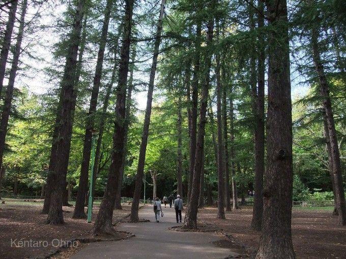 円山公園(札幌)