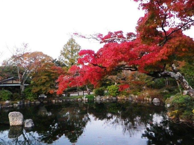 圓山公園(京都)