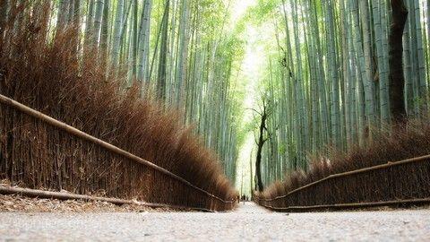 關西四都~京阪神奈、世界遺產、水上巴士、溫泉饗食五日遊