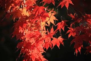 京都丹波鍬山神社