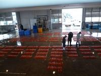 新湊海鮮市場