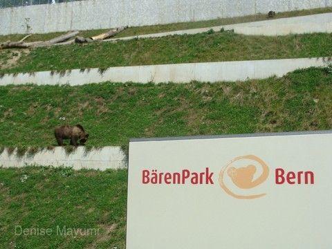 伯恩熊公園