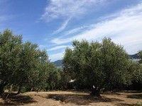 小豆島橄欖樹公園