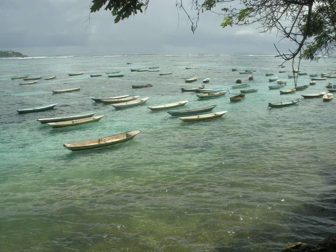藍夢島-海藻田