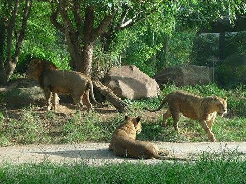 【兒童折扣6000】親子峇里~夜間動物園、大象公園、Splash水樂園、狩獵小屋、雙五星自助饗宴5日(兩人成行)