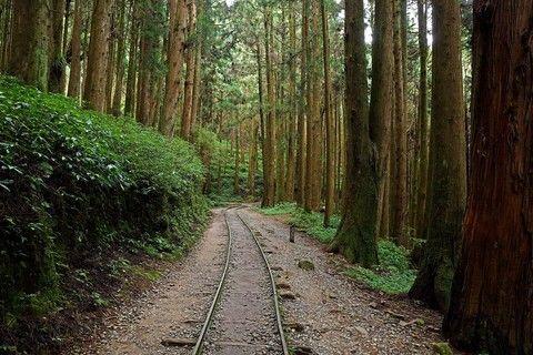 高雄⇄嘉義《阿里山森林鐵道秘境》特富野古道(全程).柳杉環繞《1》日