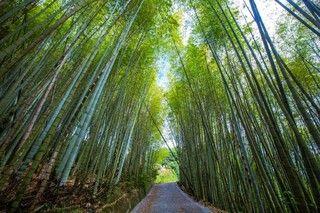綠色隧道 嘉義梅山