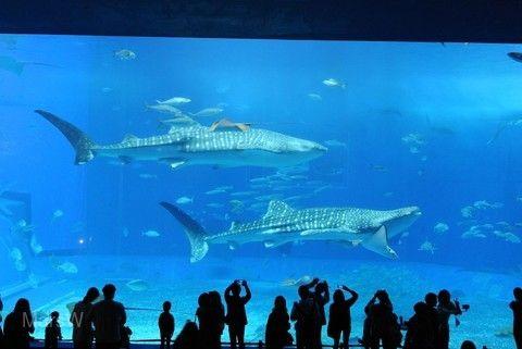 【人氣首選】沖繩絕景古宇利島、超人氣水族館、海豚秀、北谷町海濱下午茶4日 (虎航/早早班)