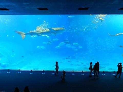 ★【超值暢遊沖繩】★水族館.恐龍公園.首里城.瀨長島4日(不含稅)