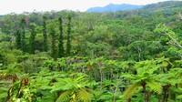 DINO恐龍公園山原亞熱帶之森