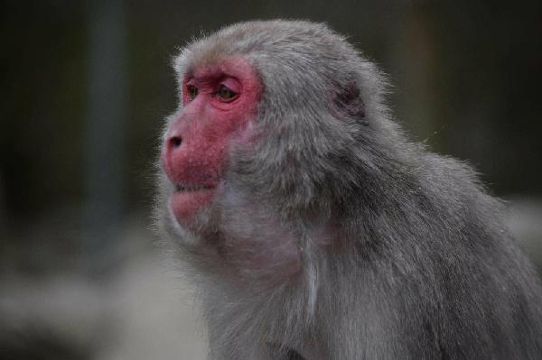 國立高崎山自然動物園