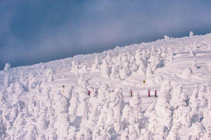 藏王高原樹冰群