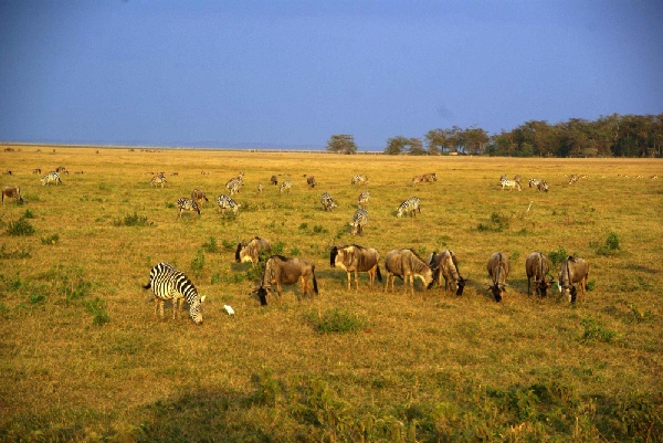 安博塞利國家公園