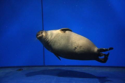 貝加爾湖生態博物館