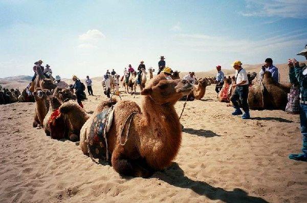響沙灣旅遊景區