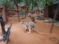 【饗樂藝術雪梨7日】雪梨歌劇院(入內參觀)、藍山國家公園、無尾熊保護區、徒步雪梨港灣大橋