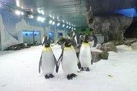 凱利達頓南極水族館