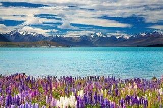 【金旅獎】紐西蘭南北島五大國家公園冰河船12天(春夏版)★早鳥優惠+贈送全程小費★