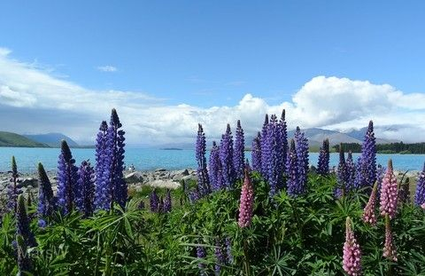 紐澳家族-紐西蘭南北島超值感恩8天-米佛峽灣、第阿納、瓦納卡、庫克山(紐航) 優惠方案:超值優惠感恩團.不含ETA旅遊稅