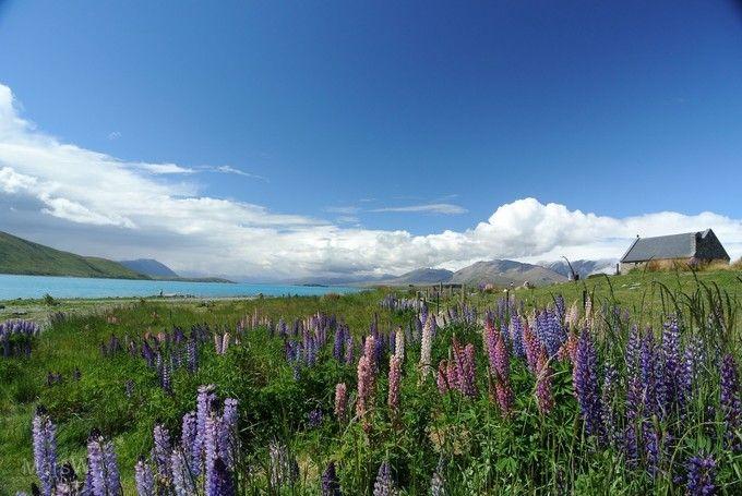 新一品紐西蘭~純南島冰河、高山火車、峽灣8天(送小費--紐西蘭航空直飛奧克蘭) 優惠方案:送小費