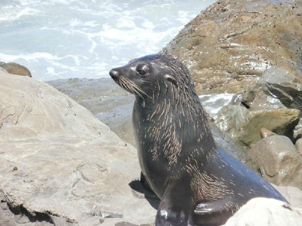 海豹棲息地