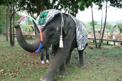 清邁新魅力-大象主題知性之旅+叢林過山車+夜間動物園五日遊