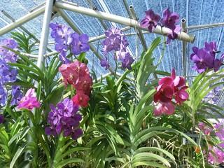 清邁湄沙蘭花園
