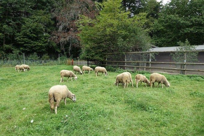 小瑞士绵羊村