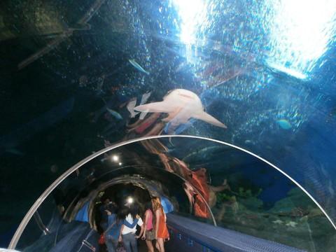 泰國龍蝦吃到飽~泰薇詩飯店+東芭樂園+SPA+水上市場+火車夜市5日~早去下午回(稅外加)