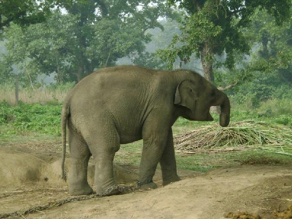 大象撫育中心