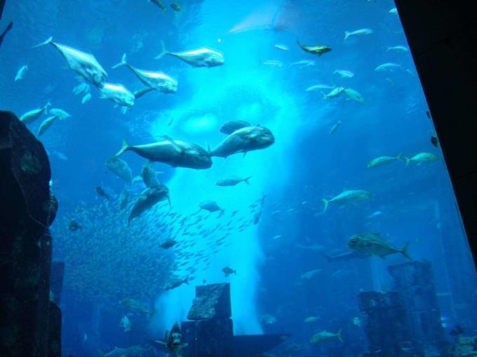 水上歷險樂園