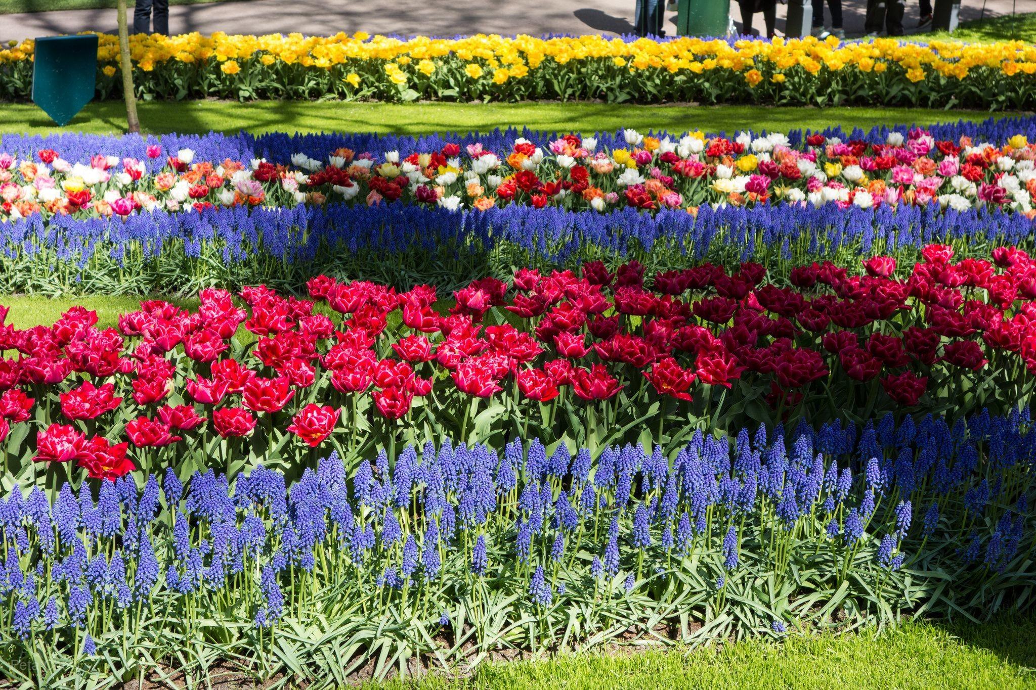 ◆魅力歐洲◆花現~荷比法8天【鬱金香花園、羅浮宮、凡爾賽宮、雙遊船、黃金布魯日、WIFI分享器】
