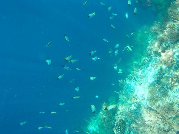 帛琉老爺5日~洛克群島2次出海+飯店自助晚宴+雙龍雙蟹海鮮饗宴(2人成行)