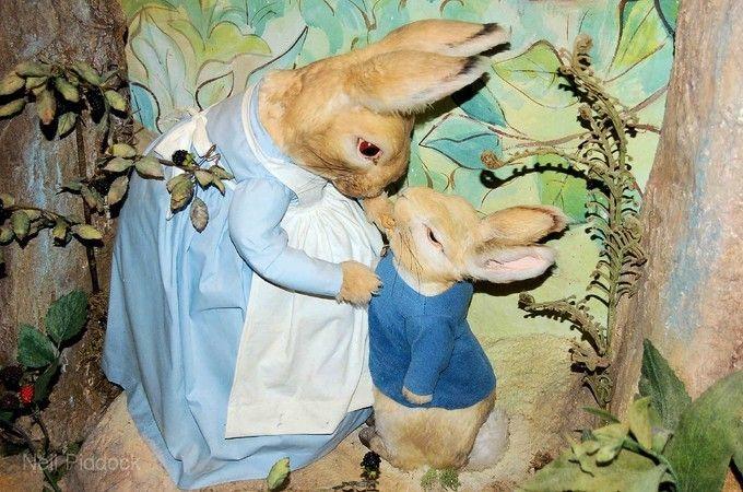彼得兔世界