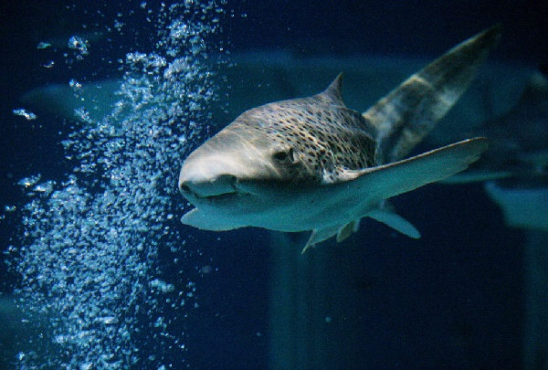 樂高海洋生物水族館