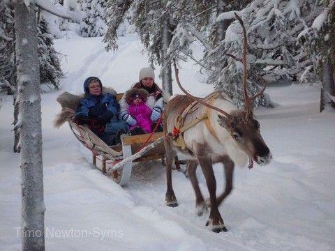 馴鹿雪橇之旅