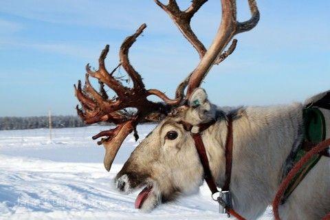 《挪威芬蘭》北歐極光嚴選10日❄️三晚玻璃屋住宿、破冰船、冰海漂浮、現撈帝王蟹、冰上釣魚、狗拉雪橇❄️