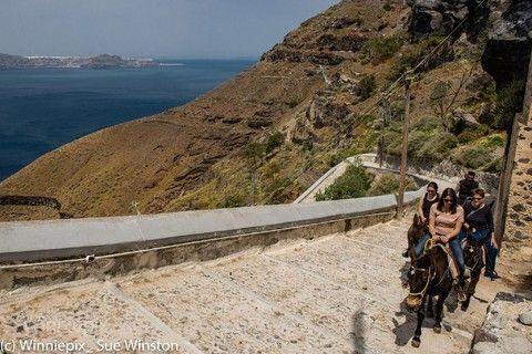 費拉騎乘驢子