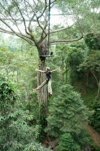 清邁好時光5日~森林渡假村、泰山叢林遊記、英式下午茶、湄登大象學校(含稅、無購物)