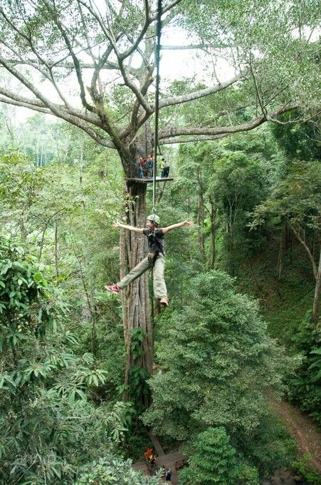 清邁好時光5日~森林渡假村、泰山叢林遊記、英式下午茶、湄登大象學校(無購物)[含稅]