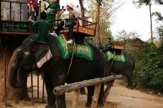 騎乘大象體驗