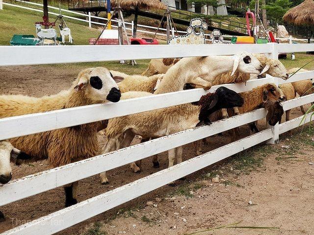 綿羊農場樂園
