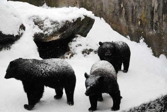 奧飛驒熊牧場