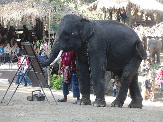 芭達雅暹邏象園