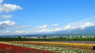 北海道花田錦簇.天外奇蹟熱氣球體驗.旭山動物園.三大蟹五日