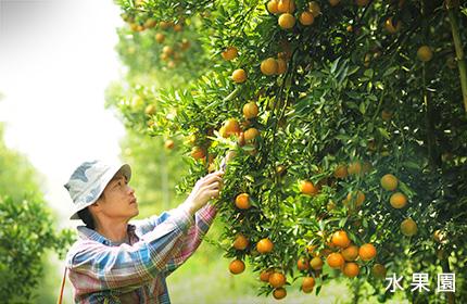 芭達雅熱帶水果園