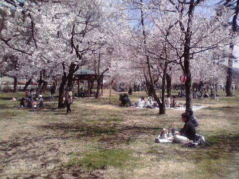 國府櫻野公園