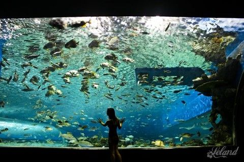 【品味關島好時光】LOTTE 樂天飯店5天 <BR>海底漫步、夕陽遊艇、潛水艇或水肺潛水、水族館、THE BEACH BBQ晚餐秀【兩人成行】